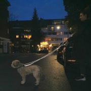 GOLEYGO Führleine Reflective Lifestyle